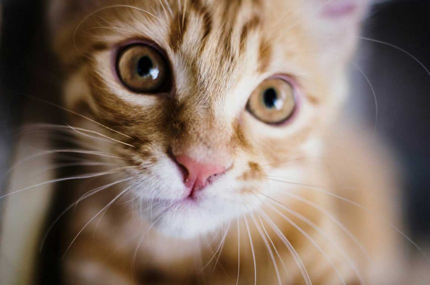 15 Tips to Keep Your Pet Safe and Healthy