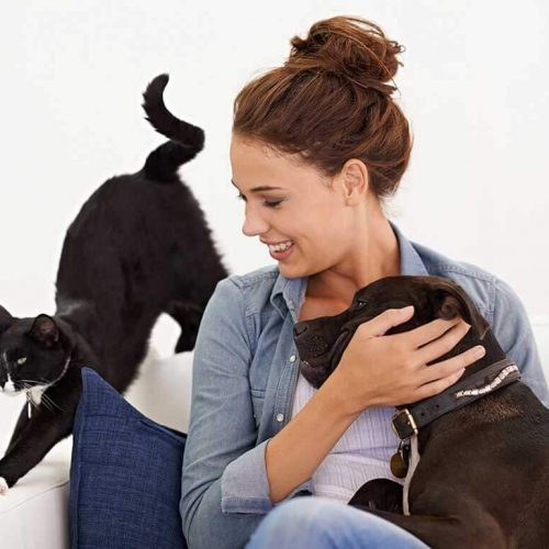 10 Ways to Engage Your Dog Indoors