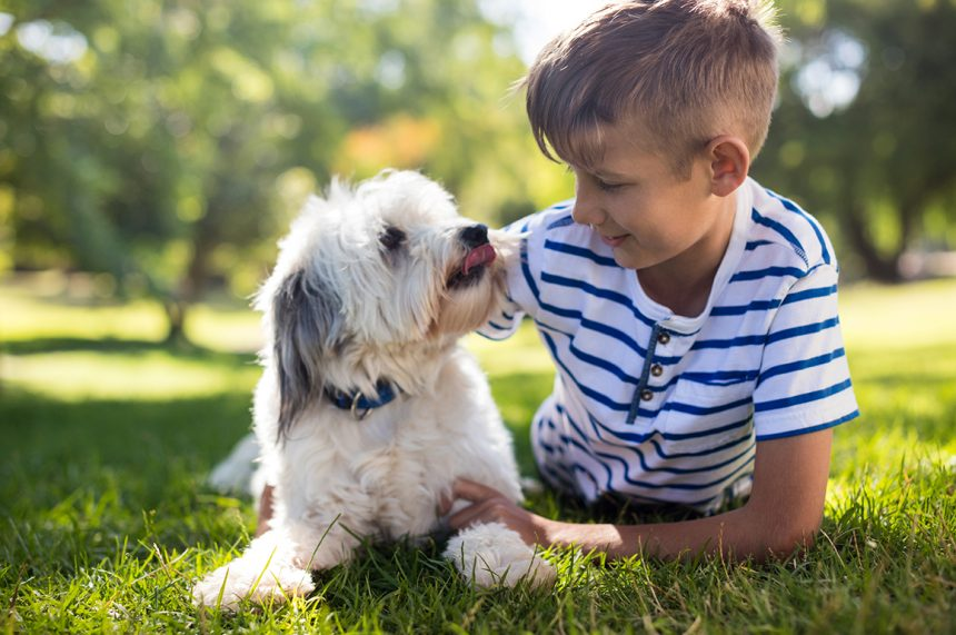 Annual Vaccinations for Your Pet