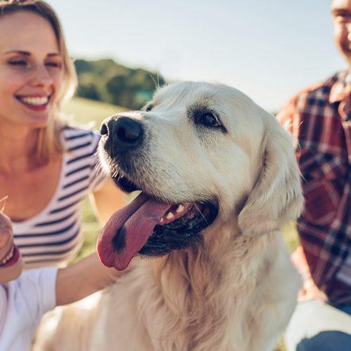 Animal Shelter Volunteers Meeting